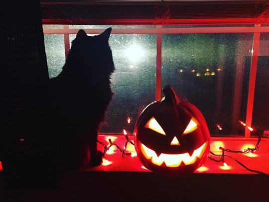 halloween4a