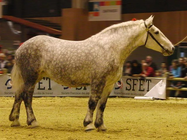 cheval (22)