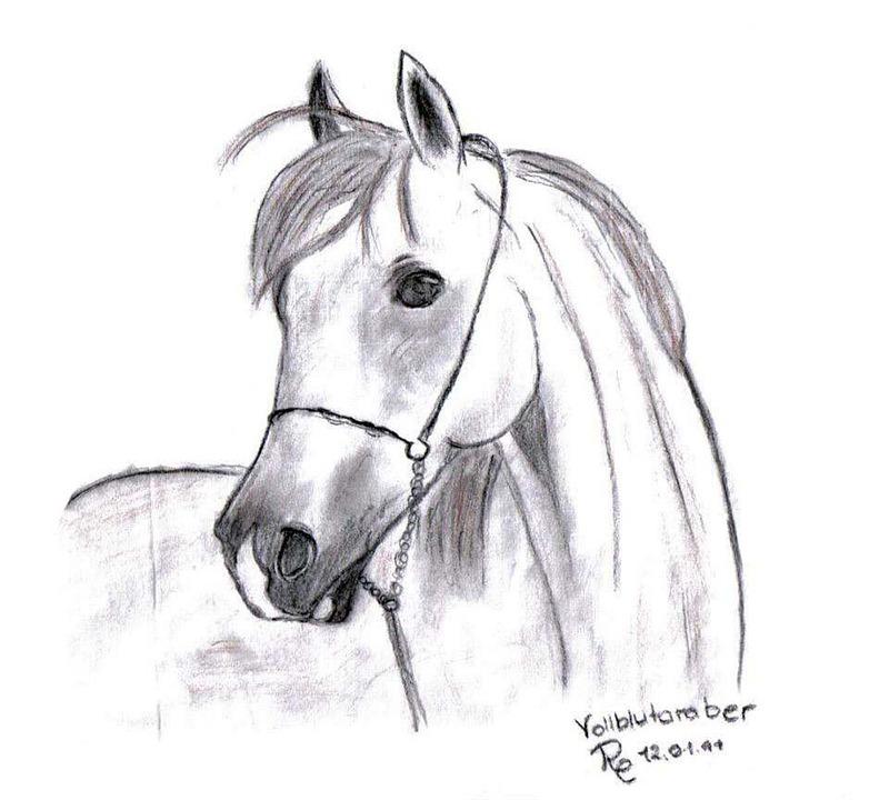 Dessin de cheval - Dessin tete de cheval ...