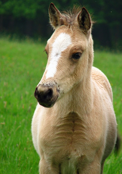 Image de cheval - Chevaux gratuits ...