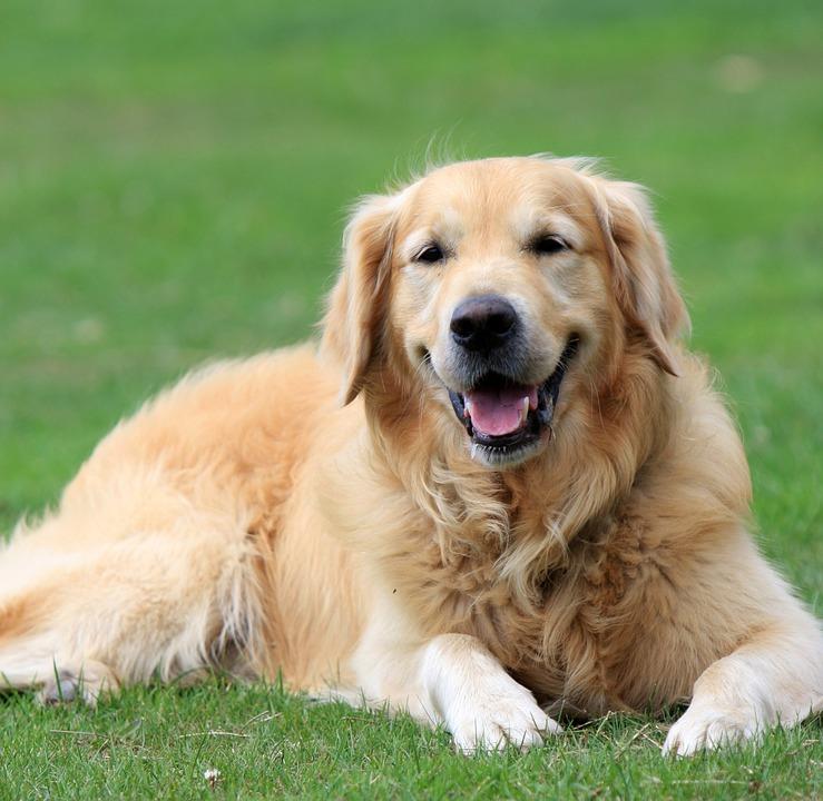 chien (8)