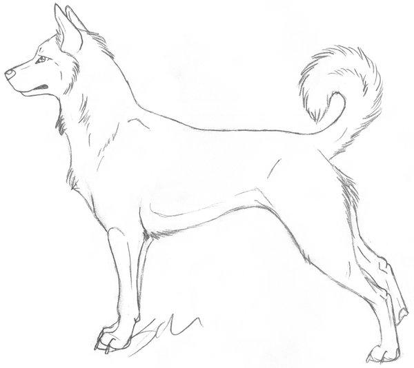 chien10