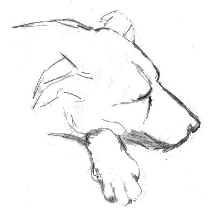 chien15