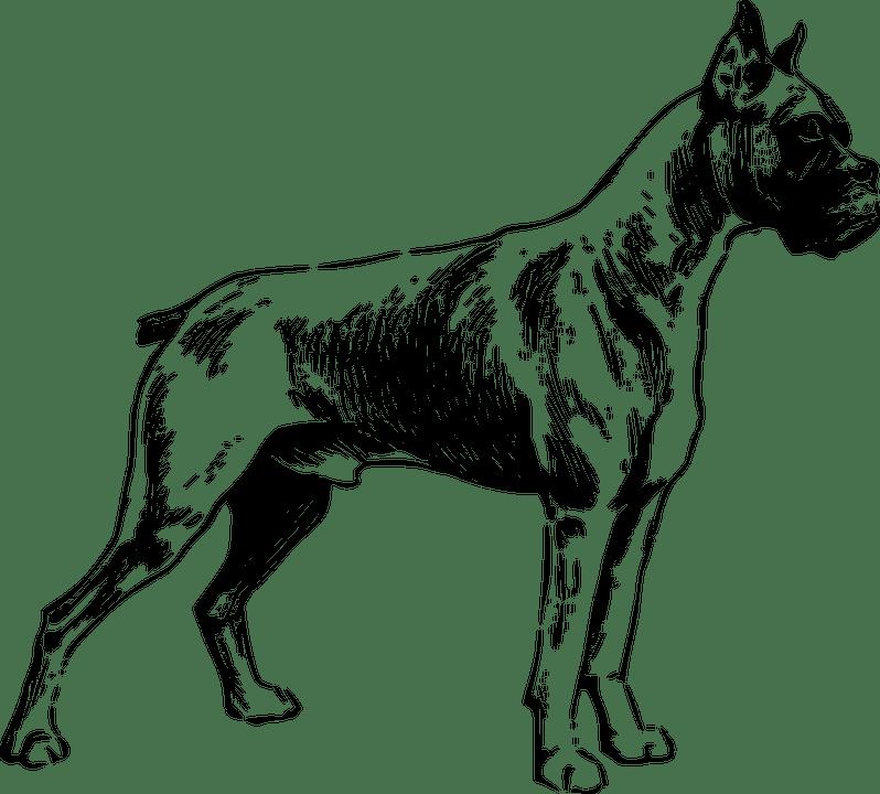 chien21