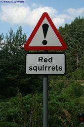 Red Squirrels Warning Sign