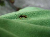 Wasp on tshirt
