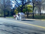 Central Park Horse Cart