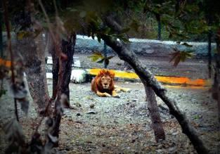 Renuka Zoo