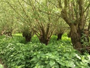 bomen-in-onkruid
