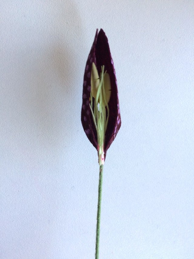 two petals on stem wire