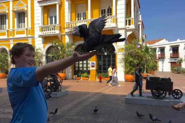 young tourist boy feeds pigeons in Cartagena, Colombia