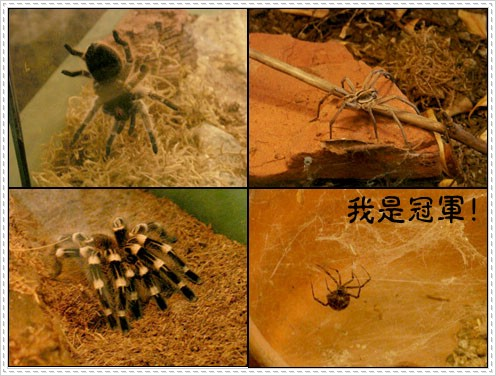 96.08.27 舊金山動物園(SF ZOO) – (下)
