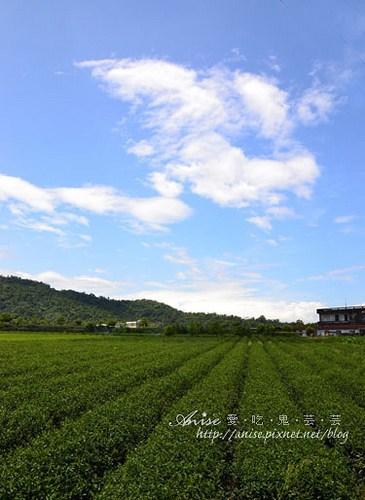 芳岳茶園001.jpg
