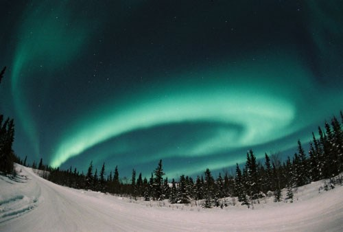 Aurora_by_David_Cartier_2.jpg