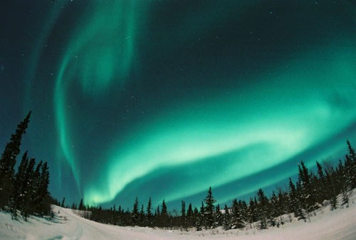 Aurora_by_David_Cartier_6.jpg