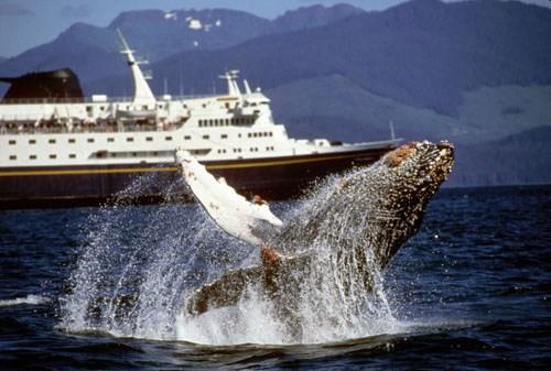 AMHS Whale Viewing.jpg