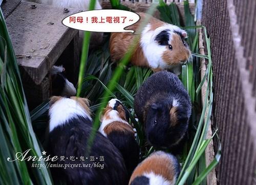 宜農牧場_030.jpg