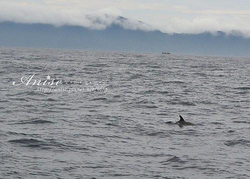 宜蘭賞鯨_028.jpg