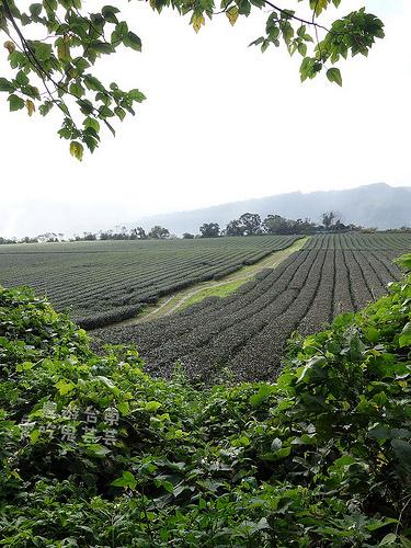 農遊台東003.jpg