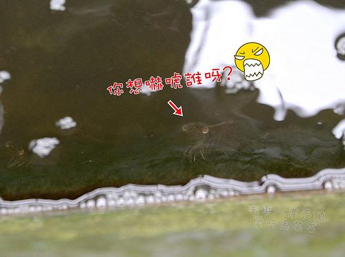 金車水產養殖_022.jpg