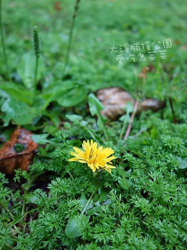 大溪埔頂公園_022.jpg