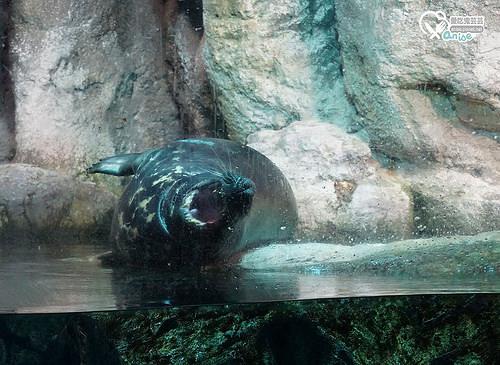橫濱景點.八景島海島樂園,日本最大水族館玩好嗨!