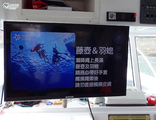 綠島潛水.超多Nemo卡哇伊!2日快速發照 SDI/TDI/ERDI (行程、報名方式詳見文末)