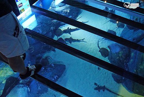 新加坡.S.E.A 海洋館