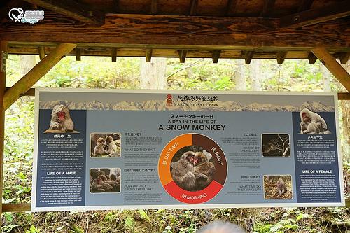 猴子泡溫泉地獄谷野猿公苑,原來也是賞楓景點!