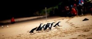 今日熱門文章:澳洲墨爾本.市區半日遊、企鵝島看企鵝搖擺屁股回家
