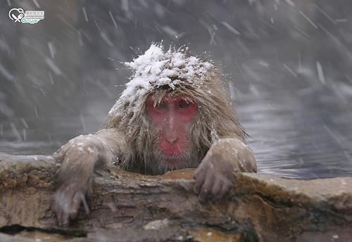 猴子泡溫泉地獄谷野猿公苑,原來也是賞楓景點! @愛吃鬼芸芸