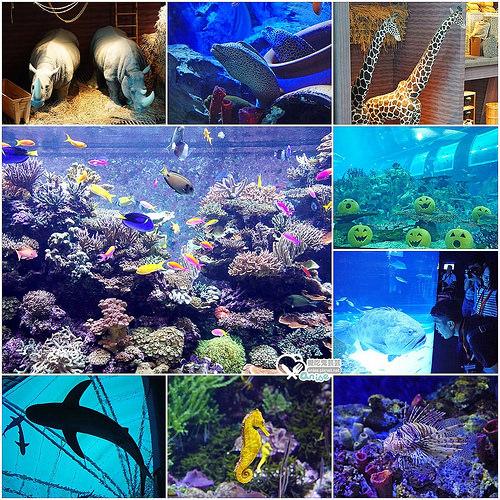 新加坡.S.E.A 海洋館 @愛吃鬼芸芸