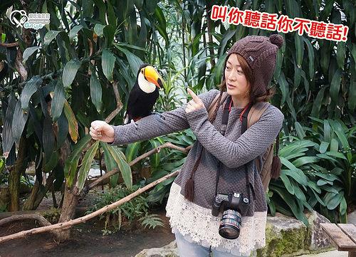 島根旅遊.松江貓頭鷹花園,好多鳥兒玩瘋啦! @愛吃鬼芸芸