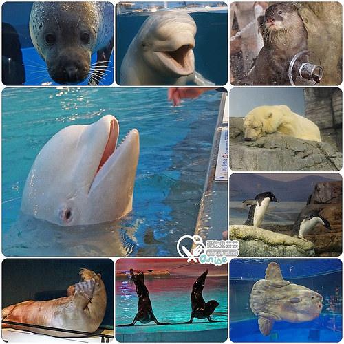橫濱景點.八景島海島樂園,日本最大水族館玩好嗨! @愛吃鬼芸芸