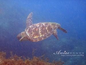 今日熱門文章:小琉球民宿+浮潛套裝行程 (蟹老闆、南國海岸)
