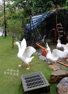 今日熱門文章:宜蘭民宿.水鳥印象,無尾港旁的自在民宿(有超爆笑瘋鵝跟皮老闆!)