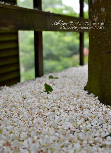 2011油桐花季 – 三義秘密小徑 (上) – 雙峰山、福田瓦舍、峰綠溪 (5/6) @愛吃鬼芸芸