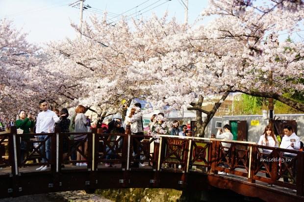 釜山旅遊.韓國櫻花NO.1鎮海櫻花祭:余佐川櫻花道、慶和車站(跌倒阿姨遊記)