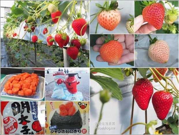 【鑽石之路】白草莓、桃子草莓、茨城草莓45分鐘吃到飽(大洗ベリーズ Oarai Berry's) + 明太子工廠好好買