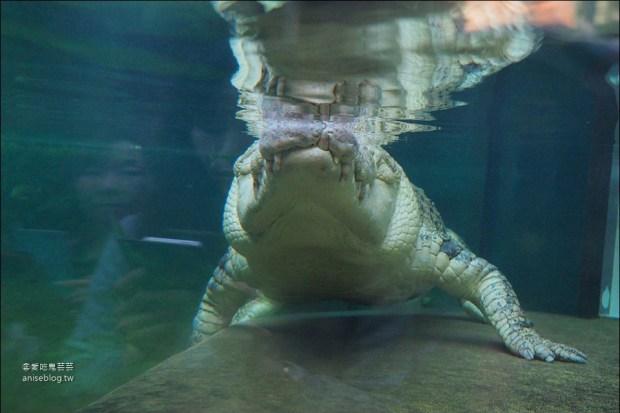 雪梨景點套票   雪梨塔+水族館+野生動物園+杜莎夫人蠟像館