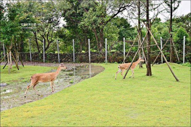 斑比山丘、美美子咖啡,台灣版小奈良與小鹿一起散步,宜蘭新景點(姊姊遊記)