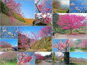今日熱門文章:台北、新北櫻花季,8個景點、秘境一次收錄,陸續更新(姊姊遊記)