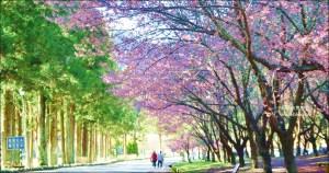 今日熱門文章:武陵農場櫻花季一日遊行程,宜蘭、台中景點(姊姊遊記)