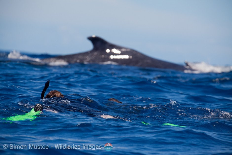 whale swim3 - Unique Experiences