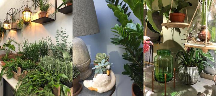 Hoe planten zorgen voor een betere nachtrust