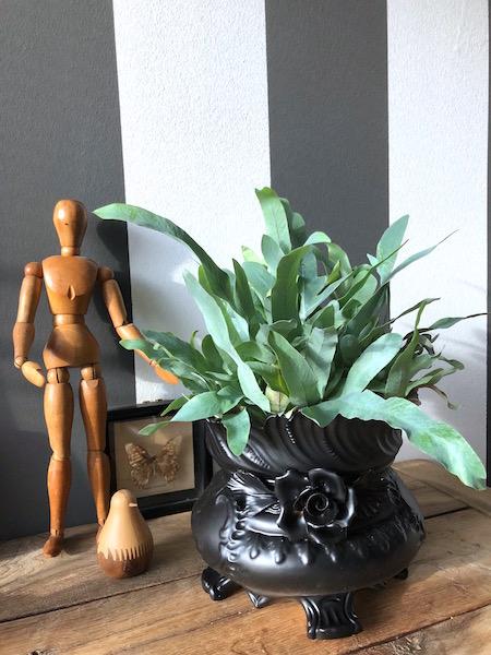 bloempot voor je interieur