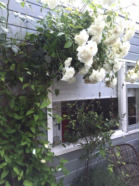 dagdroom-tuin-rozen-2