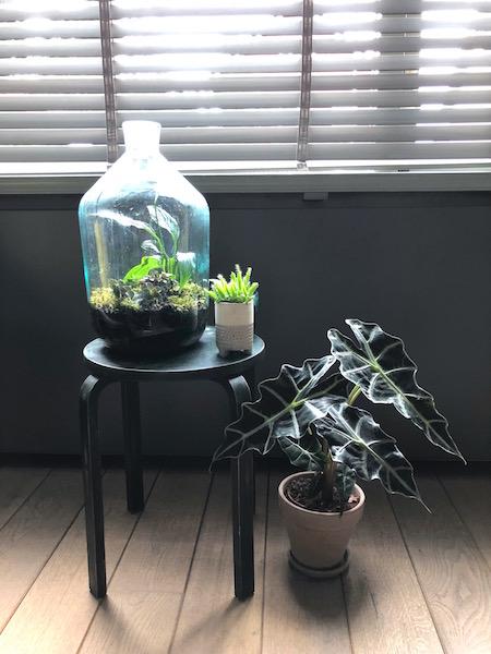 bottle garden & plants