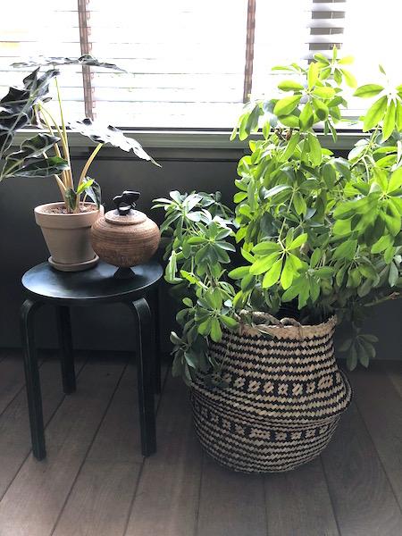 woontrends  mand met plant