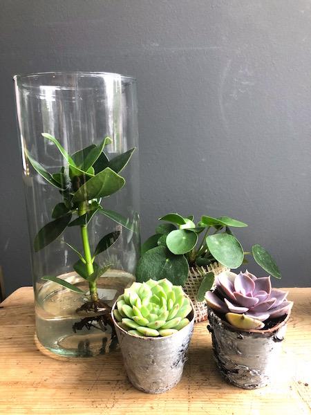 tafeldecoratie planten